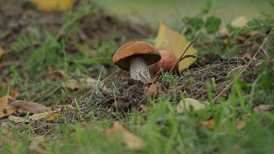 К чему снится сбор грибов беременной 70