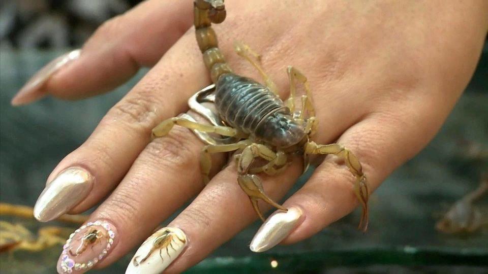 Картинки скорпионы на ногтях