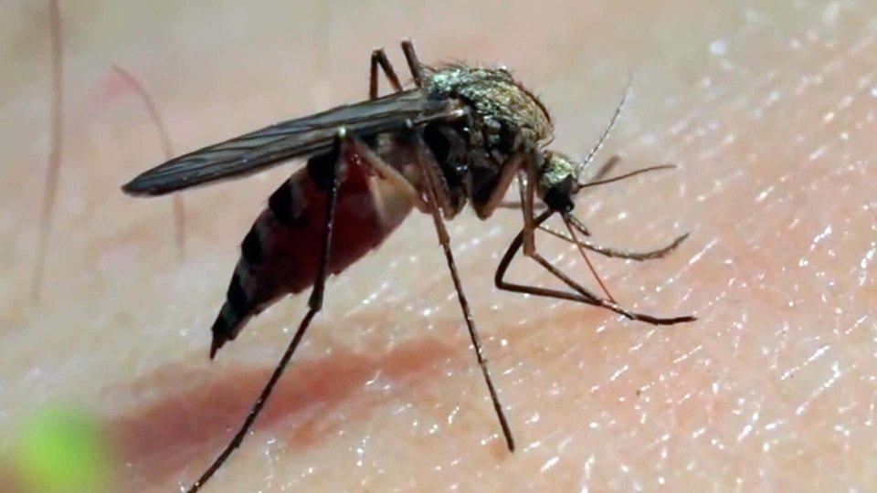 Пальма, картинки комары и мошки