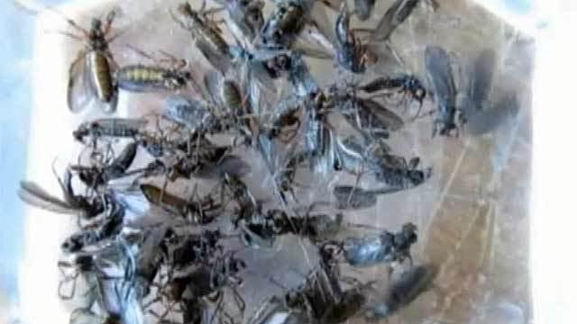 Клипарт нашествие насекомых фото 449-441