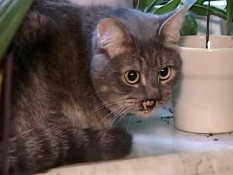 котёнок мышкин фото после операции